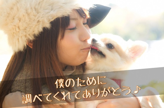 愛犬のthankyou