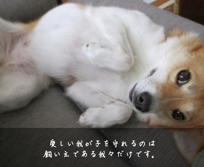 愛犬を守れるのは飼い主だけ